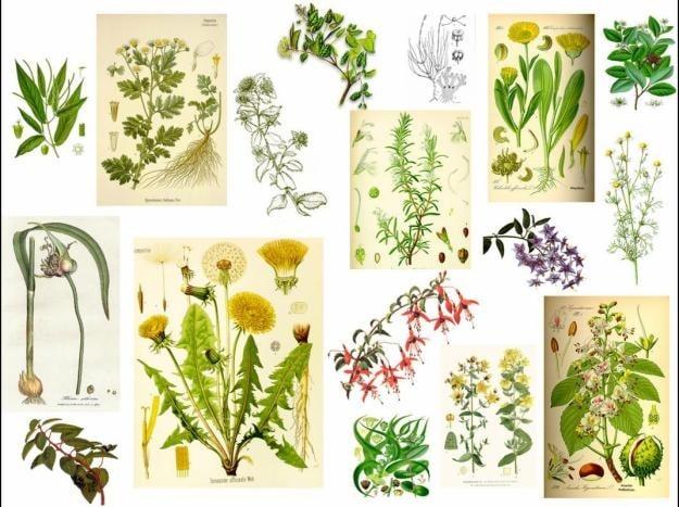Hierbas medicinales para mejorar la salud