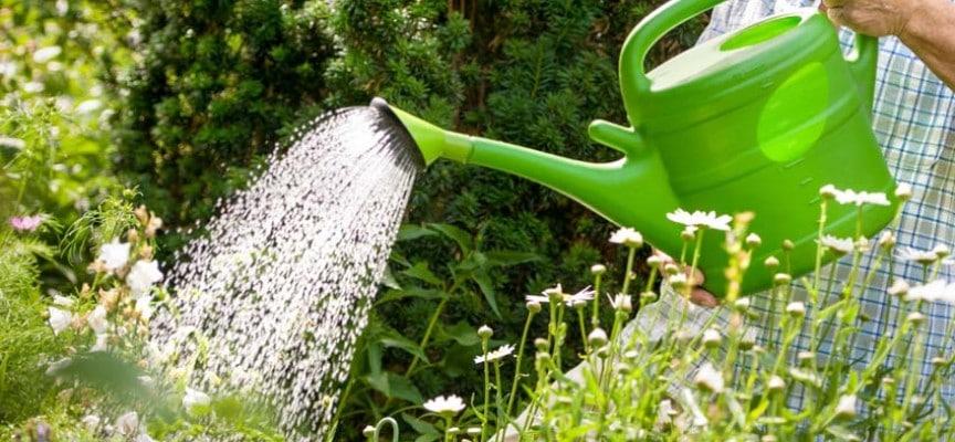 Es bueno regar las plantas con agua caliente for Plantas para estanques de agua fria