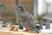 Fotos de aves de ciudad