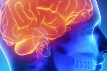 mente humana y psicologia