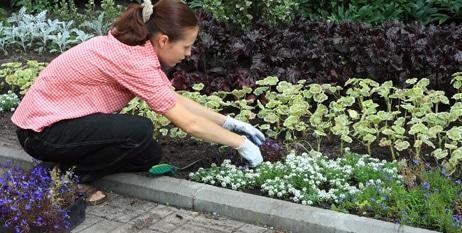 Cuidado de las plantas y jardin