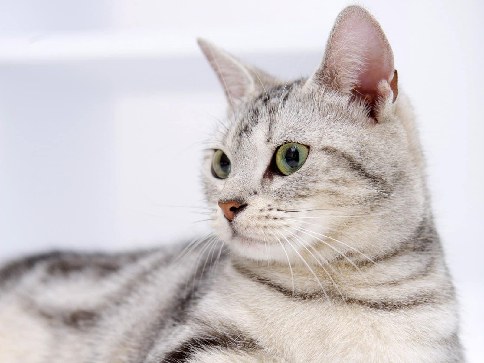 Como hacer que un gato esté tranquilo por las noches