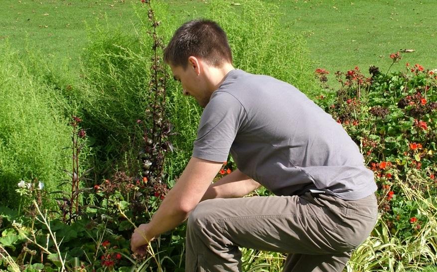 decoracion del jardin y jardineros