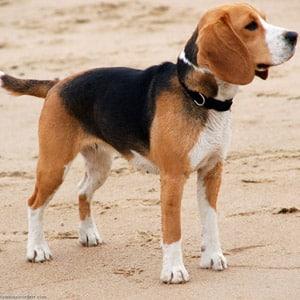 cuidados para perros