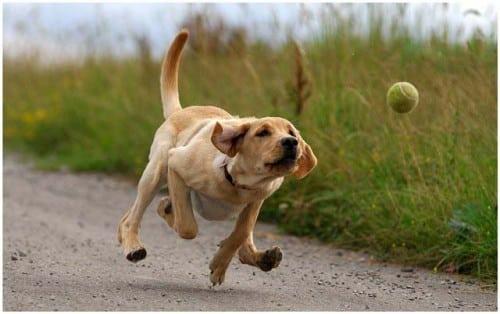 perros y otras mascotas