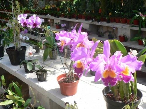 Flores orquideas para decorar el jardin